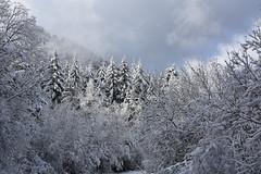 DSC_4222 (griecocathy) Tags: paysage montagne neige sapin arbre brume ciel nuage blanc bleu vert