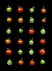 59406.01 Solanum lycopersicum 'Sweet 100' (horticultural art) Tags: horticulturalart solanumlycopersicumsweet100 solanumlycopersicum solanum tomato sweet100tomato fruit food grid rectangle lines
