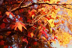 Autumn in Milano (karenmansoldo) Tags: autumn fall nature leaves trees
