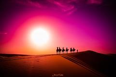 ~Camel Trekking~ (JERRY TAHA PHOTOGRAPHY) Tags: worldtravel world wanderlust travel traveler travelling traveller traveling jerrytahatravel jerrytaha marokko morocco maroc sahara merzouga ergchebbi desert hills sun sunset camel camelride cameltrekking sand nikon d7500