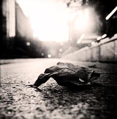 Autumn mood (Claudio Taras) Tags: claudio contrasto controluce rolleiflex35f bw bokeh biancoenero bokehlicious black night shadow street rollfilm roma dof film 6x6 taras foglie autmn 120rollfilm strada luci ombre tlr explore