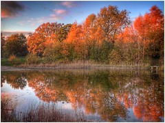 half and half (Andy Stones) Tags: trees sunlit sunlight sky clouds autumn autumnal colour colourful water pond silicapond reflection bankside reeds nature naturephotography weather weatherwatch outdoors outside image imageof imagecapture photoof photography scunthorpe lincolnshire northlincolnshire northlincs nlincs