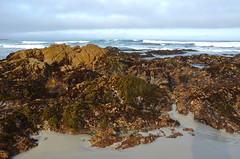 At low tide (afagen) Tags: california pacificgrove asilomarstatebeach montereypeninsula asilomar beach pacificocean ocean tidepool