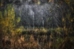 Lacus sanguinis (Claudia G. Kukulka) Tags: tree baum trees bäume fall autumn herbst foliage laub forest woods wald irtenbergerwald guttenbergerwald pond teich swamp bog wetland moor painterly blutsee