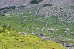 IMG_8198-1 (Debbie Spradley) Tags: montana family vacation troy glaciernationalpark rosscreekcedarsscenicarea kootenaifalls goat sheep marmot ptarmigan celebration hike hiddenlaketrail stmarylake wizardisland lakemcdonald goingtothesunroad