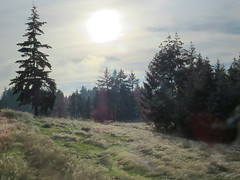 Frosty Afternoon (Shelley Penner) Tags: frosty trees misty sun moody vancouverisland