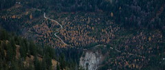path through autumn woods (bkellerstrass) Tags: bayern alpen alps bavaria fischbachtal karwendel autumn herbst herbstwald wald woods wood trees