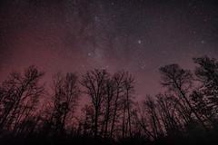 The Night Sky at Saint Croix State Park, Minnesota (Tony Webster) Tags: minnesota saintcroixstatepark stcroixstatepark astrophotography longexposure night nightsky sky stars statepark trees winter
