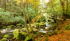 Tollymore Forest Park, County Down, Northern Ireland (east med wanderer) Tags: northernireland ulster uk ireland countydown bryansford tollymoreforestpark gameofthrones stream rivershimna autumn