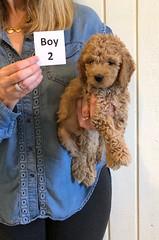 Lucy Jo Boy 2 pic 4 1-19