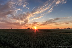 Sonnenuntergang in Gammendorf (Re Ca) Tags: fehmarn germany insel norddeutschland ostholstein ostsee schleswigholstein travel traveling sonnenuntergang sunset goldenhour goldenestunde gammendorf
