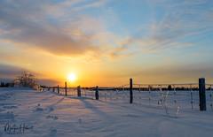 À la mémoire d'un bon ami (Maryse Hébert) Tags: hiver
