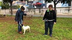 IMG_8629 (Doggy Puppins) Tags: educación canina adiestramiento canino perro dog