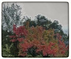 El Otoño te marca (pedroramfra91) Tags: naturaleza nature otoño autumn colores colors exteriores outdoors fractalius bosque wood
