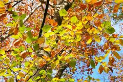 Autumn Paintbox (her035) Tags: blätter buchen herbst beechwood autumn fall leafs buchenwald nature natur wald forest