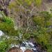 Top of Waipoo Falls Waimea Canyon State Park Kauai, Hawaii