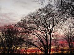 Sunrise_9508 (smack53) Tags: smack53 sunrise earlymorning morning morningsky clouds cloudy cloudysky trees silhouettes paintedsky autumn autumnseason fall fallseason canon powershot sx530hs canonpowershotsx530hs westmilford newjersey