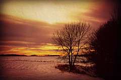 Late Afternoon, November 18, 2018 (Dave Linscheid) Tags: autumn fall winter snow tree silhouette texture textured rural farm country agriculture sunset butterfield watonwancounty mn minnesota usa picmonkey