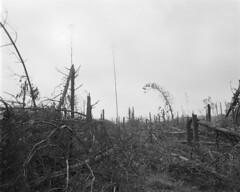 Anglų lietuvių žodynas. Žodis aftermath reiškia n 1) atolas; antroji žolė; 2) pasekmė lietuviškai.