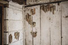 Mud Dauber nests in an abandoned Dairy (N.the.Kudzu) Tags: rural morgancounty georgia abandoned dairy muddauber nests fujixf10 lightroom