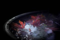 Lost (ursulamller900) Tags: trioplan2950 maple ahorn leaves blätter wasser water bokeh mygarden red