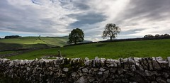 On the other side (Phil-Gregory) Tags: nikon d7200 tokina1120mmatx tokina 1120mmproatx11 1120mmproatx 1120prodx wideangle ultrawide superwide green tree peakdistrict dovedale wall stonewall staffordshire scenicsnotjustlandscapes england uk landscapes