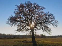 Am Mönchbruch (nordelch61) Tags: deutschland heimat mönchbruch hessen naturschutzgebiet rüsselsheim mörfeldenwalldorf wald baum bäume ast äste zweig zweige herbst blattfärbung