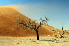 Blowing In The Wind (Alan1954) Tags: namibia africa holioday 2018 sanddune trees namibdesert desert platinumheartaward platinumpeaceaward
