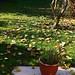 raking leafs..... (mewzan) Tags: rake grass fire grassfire news