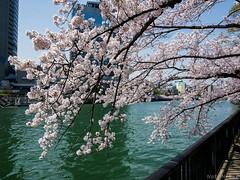 (Noti NaBox) Tags: japon japan sakura cerisier hanami cherry cherryblossom spring printemps osaka kema sakuranomiya