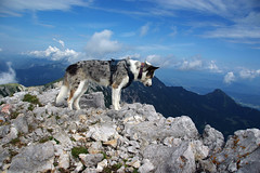 Nice personality (LB1415) Tags: dog animal summer july rocks countryside pentax k200d jpg clouds blue sky walking karavanke slovenia europe lb1415 allrightsreserved landscape mountain ridge nature mountaintop interesting poletje