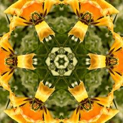 Kaleido Abstract 1887 (Lostash) Tags: art abstract edited nature patterns symmetry kaleidoscopes
