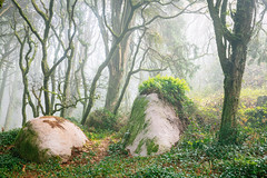 Enchanted Forest (J C Mills Photography) Tags: sintra sintracascaisnaturalpark forest woodalnd trees larch oak moss ferns boulders rocks mist mountain woodland portugal