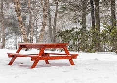 No Picnic Today (Karen_Chappell) Tags: red snow white trees park picnic bench table seats weather cold winter january snowing snowy landscape scenery scenic stjohns atlanticcanada avalonpeninsula eastcoast bowringpark canada newfoundland nfld green