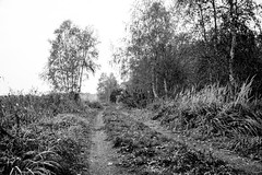 discovering autumn (Fearghàl Nessbank) Tags: nikon d700 blackwhite monochrome autumn art landscape way nature