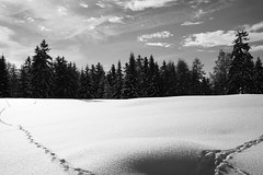 "Frozen Lake (Svend RS) Tags: voigtländer 40mmf12nokton sonyilce7m3 sonya7 alpha a7m3 sonya7lll sonya7mk3 blackandwhite monochrome noiretblanc ""artinbw"" biancoenero blancoynegro frozenlake trees winter snow clouds"