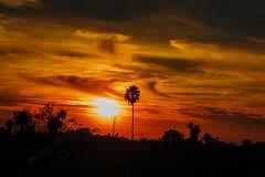 10 (morgan@morgangenser.com) Tags: sunset pretty beautiful red orange colorful evening dusk clouds blue palmtree santamonicacollege smc silhouette sun yellow cool