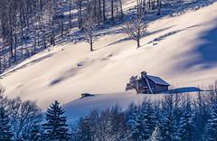 Little barn in morning light (Amrue) Tags: forrest sunny taminatal barn tree alpine switzerland valensrayofsunshine outdoor morningmood landscape snow mountain baum berg landschaft schnee schweiz wald sonnig