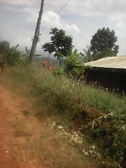 carrefour deux morts (semowilson) Tags: nature ecologie ecology environnement biologie biology africa afrique cameroun cameroon