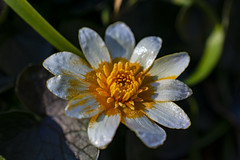 NEX_0321 (valerie something or other) Tags: carolina raleigh arboretum winter