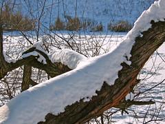 Зимние зарисовки / Winter sketches (Владимир-61) Tags: зима январь природа озеро роща дерево снег лед winter january nature lake grove ice natureinfocusgroup