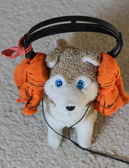 MEINE Lieblingsmusik ist 'Jazz in Baggies'! (WolfiWolf-presents-WolfiWolf) Tags: wolfiwolf wolfi wolf werk meinneuesteswerk salzgitter eneamaemü universum universe blaubeerjus blue butlers blau blueeyes marieschen kopfhörer headphones music naggärt quantensymphonie schluchzen takt metrum zeit time timeout kapital kanal meinkanal wunder kindheitserinnerungen liebe love amour amourfou jazzinbaggies