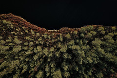 Forest edge (Klas-Herman Lundgren) Tags: dalarna sweden gimmen autumn höst november forest trees lake sjö skog travel blue tjärn porstjärn drone shore strand sifferbo se