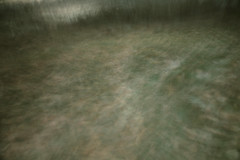 Oaks Bottom (Tony Pulokas) Tags: blur motionblur camerashake intentionalmotionblur tree cottonwood leaf sunset oaksbottom portland oregon winter ice intentionalcameramovement oaksbottomwildlifepreserve