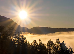 Sun of the fog (Dan Österberg) Tags: sun sunrise morning sunbeams beams sunrays rays fog mist foggy misty mountains trees landscape athmosperic nature warm yellow orange moment