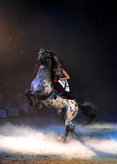 APASSIONATA (minminatmidnight) Tags: nikon nikond700 afsnikkor70–200mm128gedvrii apassionata gemeinsambisansendederwelt münchen munich olympiahalle show pferd pferde horse horses künstler artist acrobat akrobat performer performance equesterian daphnedevisser noriker pinzgauer noricopinzgauer