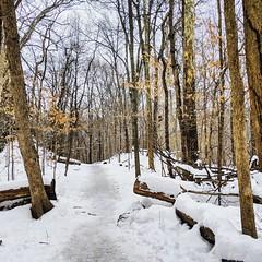 down the snowy path (ekelly80) Tags: dc washingtondc january2019 winter snurlough snow snowstorm shutdown trumpshutdown rockcreekpark woods snowy snowwalk snowday trees path trail