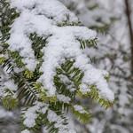 Bois des Fourasses de Laxou thumbnail