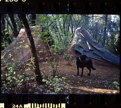 trails on 35mm film (Garrett Meyers) Tags: garrett meyers garrettmeyers ricoh ricohff3super 35mm pointandshoot color film kodak kodakfilm kodakgold200 jumps dirtjumps bmx bike bmxtrails bmxphotographer bikes shovel trees jeremykaiser andrewbentley norbit beer tarps trails