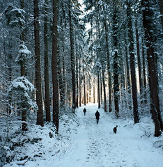 Winter Forest Path (tessar_man) Tags: winter forest suerikonta 6x6 tessar 120film mediumformatfolder zeissikon snow